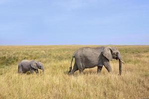 babyolifant met moeder lopen op safari