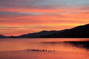 familie van eenden neemt ochtend zwemmen op het meer bij zonsopgang foto