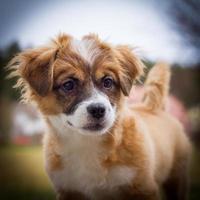 puppy in focus foto