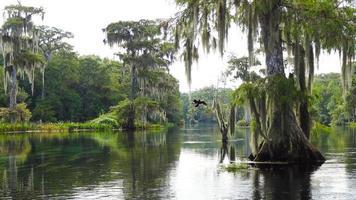 dieren in het wild van Wakulla Springs, Florida