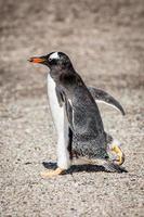 pinguïns op Antarctica