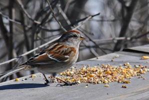 lieve zangvogel foto