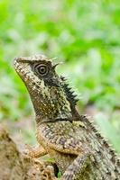 groene draak is reptiel in bos foto