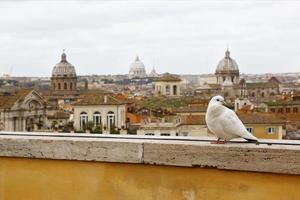 witte duif en skyline van rome