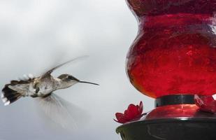 zoemende vogelclose-up die naar de voeder vliegen foto