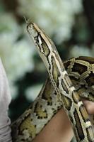 Python foto