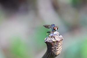 insect dat ander insect eet foto