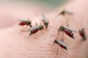 muggen foto