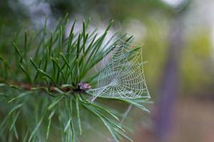 spinneweb foto