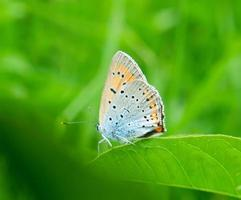 vlinder op groen gras foto