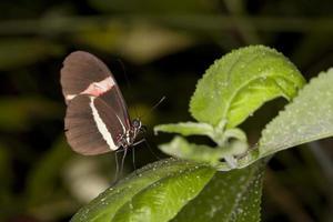 vlinder op het blad foto