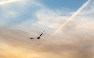 storck en zonsondergang foto
