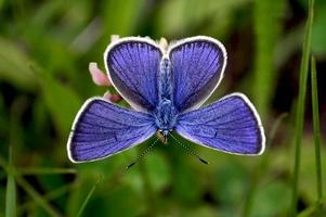 mooie vlinder