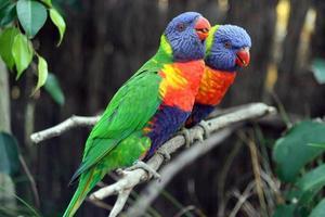 kleurrijke papegaaien foto