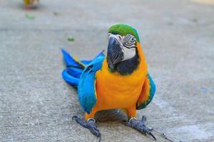 grote papegaai foto