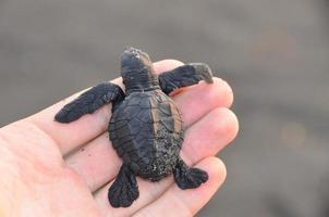 schildpad bescherming foto