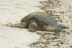 groene schildpad terwijl u ontspant op zandstrand