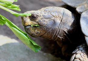 portret schildpad