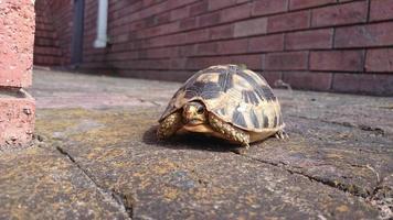 baby schildpad foto
