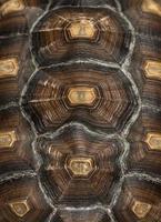 close-up van het schild van een Afrikaanse aangespoorde schildpad foto