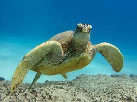 gezicht met een zeeschildpad foto