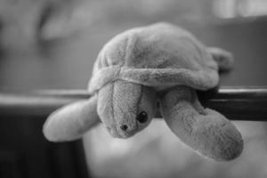 afbeelding van schildpad pop foto