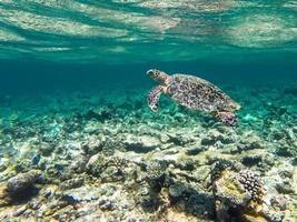 duiken maldiven foto
