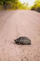 schildpad op de grond. foto