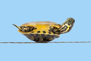 arme zieke schildpad foto