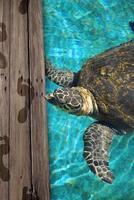 grote zeeschildpad foto