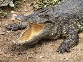 krokodil mond open foto
