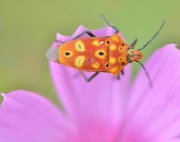 kleurrijk insect foto