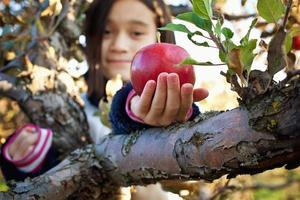 appels plukken foto