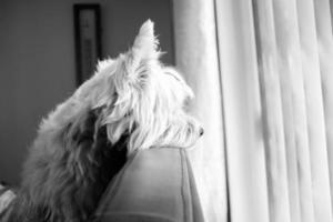 hond foto