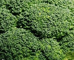 groene broccoli macro textuur foto