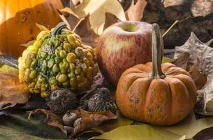 pompoen herfst sceme