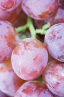 rode druiven foto