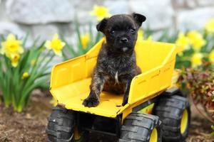 schattige puppy zittend op klassieke speelgoed kipper foto