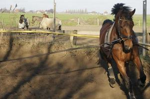 paardentraining foto