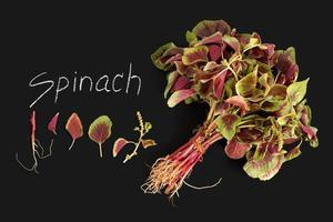 spinazie rode verse groente biologische schoolbord foto