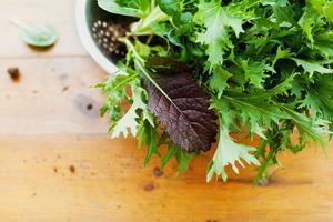 oogst verse biologische mix salade bladeren met mizuna, sla, pakchoi foto