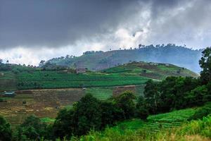 hoogland plantaardig gebied foto