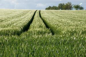 harvester track in het veld foto