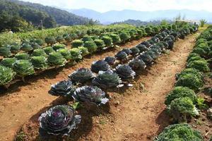 organisch voedsel foto
