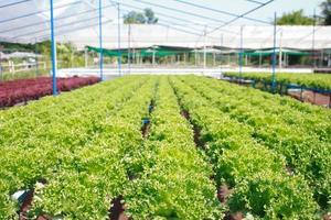 hydrocultuur groenteboerderij foto
