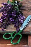 specerijen basilicum foto