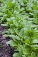 salat bieten