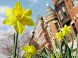 lente bloeit in de stad foto