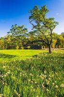 boom en het bezoekerscentrum bij cylburn arboretum, baltimore, mar foto