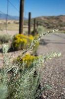 woestijn pad foto